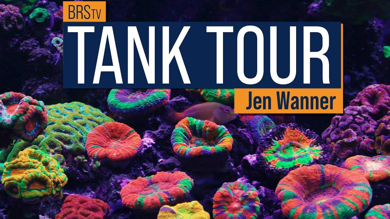 BRStv Tank Tour - Jen's Scoly Dominated Red Sea Reefer XXL 750 & Waterbox 105.4 Mixed Reef