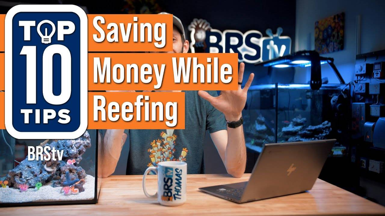 Watch Video - Top 10 Tips For Saving Money While Keeping A Reef Tank