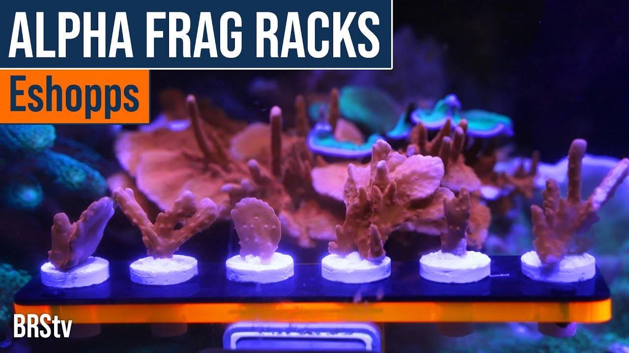 Watch Video - BRStv Product Spotlight - Eshopps Alpha Frag Racks