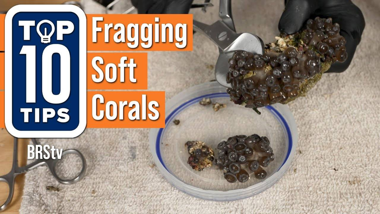 Watch Video - Top 10 Tips For Fragging Soft Corals