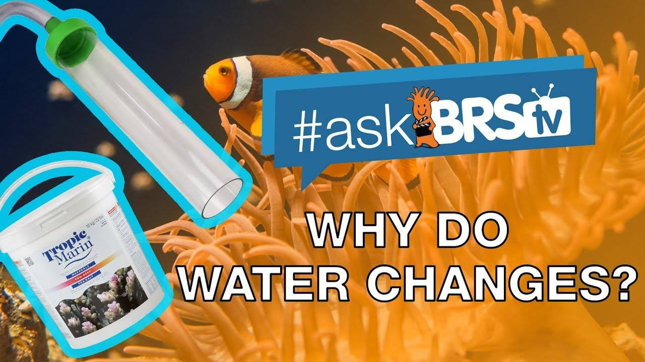 Why should I do water changes? - #AskBRStv