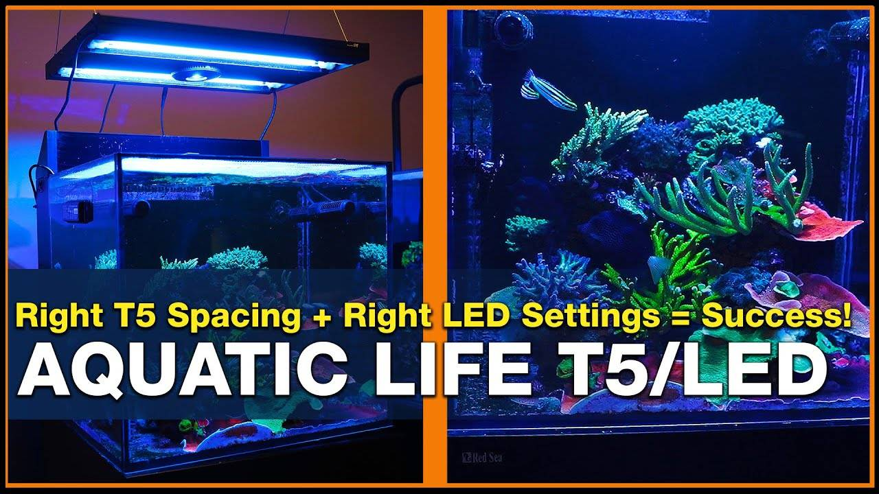 BRStv Investigates Aquatic Life LED/T5 Hybrid Bulb Spacing