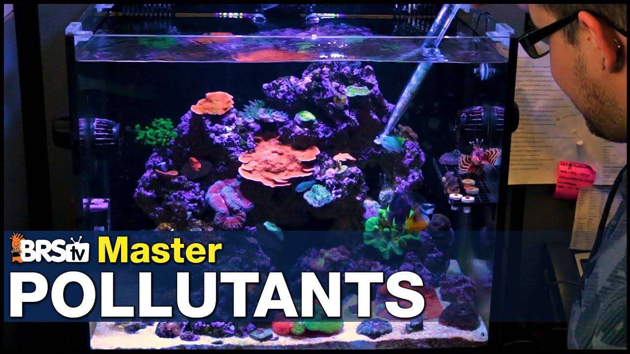Mastering Reef Tank Pollutants: Are you poisoning your tank and killing your corals?
