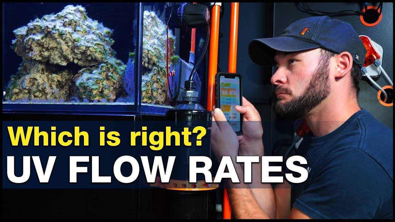 How important is the RIGHT flow rate for a UV Sterilizer in reef tanks? | BRStv Investigates