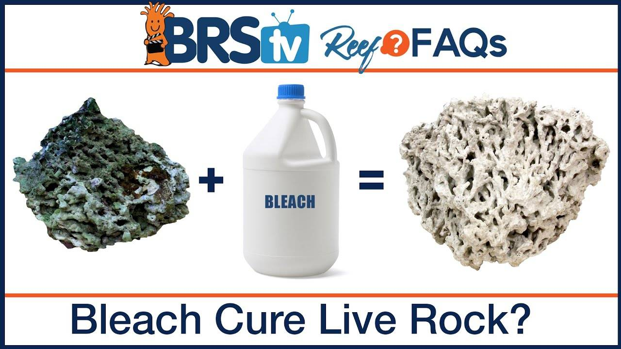 Bleach Curing Dry Rock for a Saltwater Reef Tank - BRStv Reef FAQs