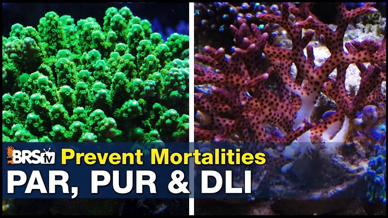 Stop killing corals with these simple steps! How to Master PAR and keep your corals alive for years.