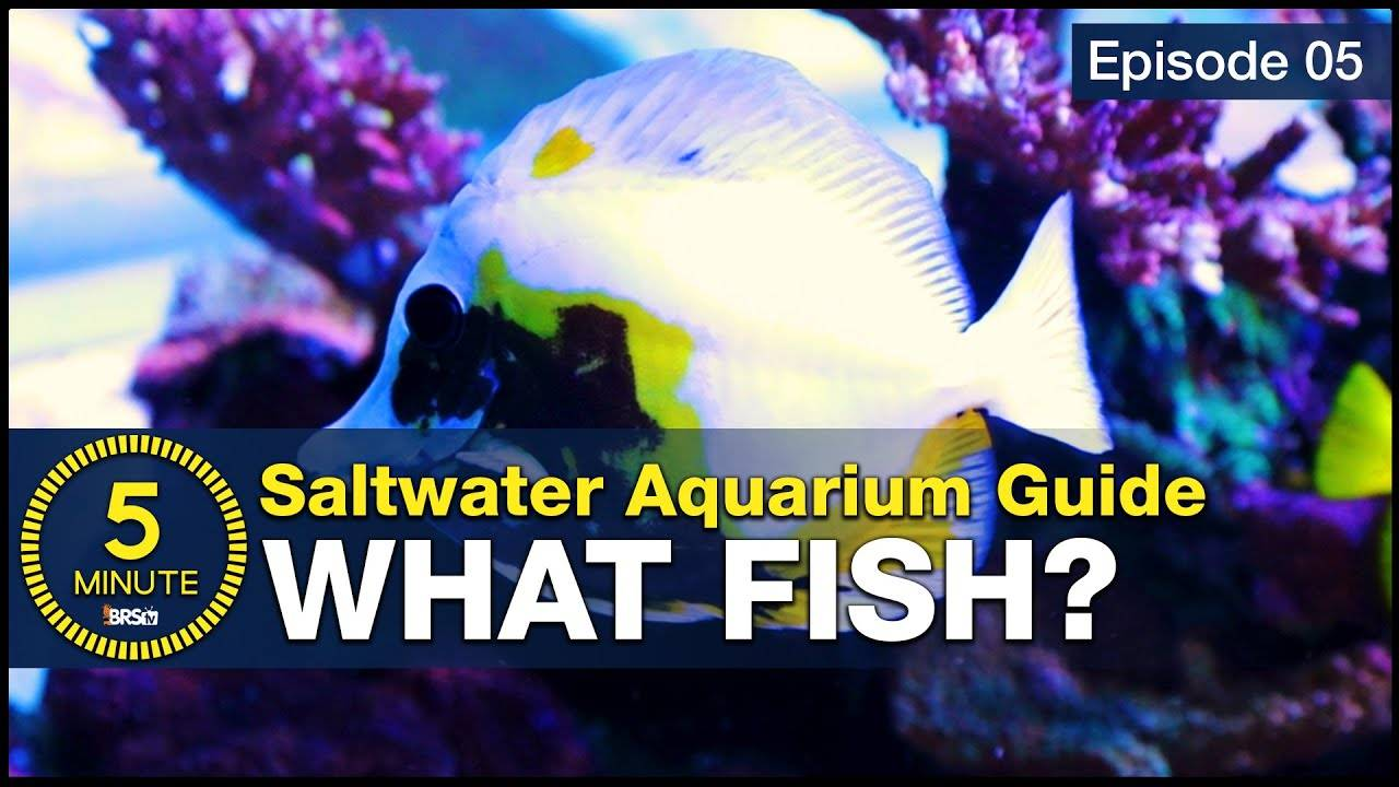 5 beginner fish every saltwater aquarium should have. Stocking a tank with utilitarian fish