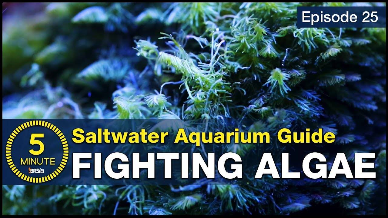 5 Minute Saltwater Aquarium Guide Episode #25 - Algae Control