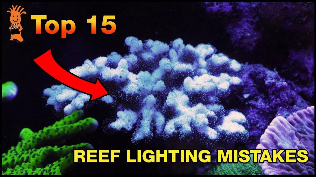 Reef Lighting Mistakes - Our biggest fails lighting saltwater aquariums