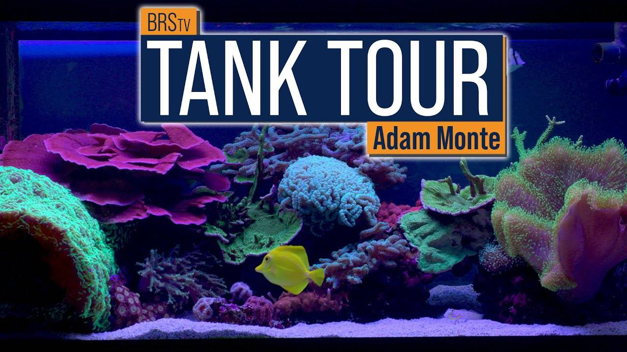 A Slice of Ocean Heaven in Your Home! Adam's 75 Gallon Mixed Reef Tank Tour