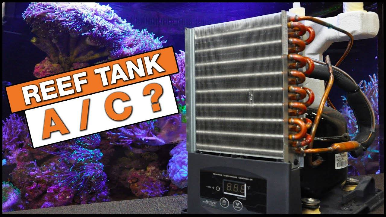 Master Cooling Your Tank With a Neptune Systems Apex