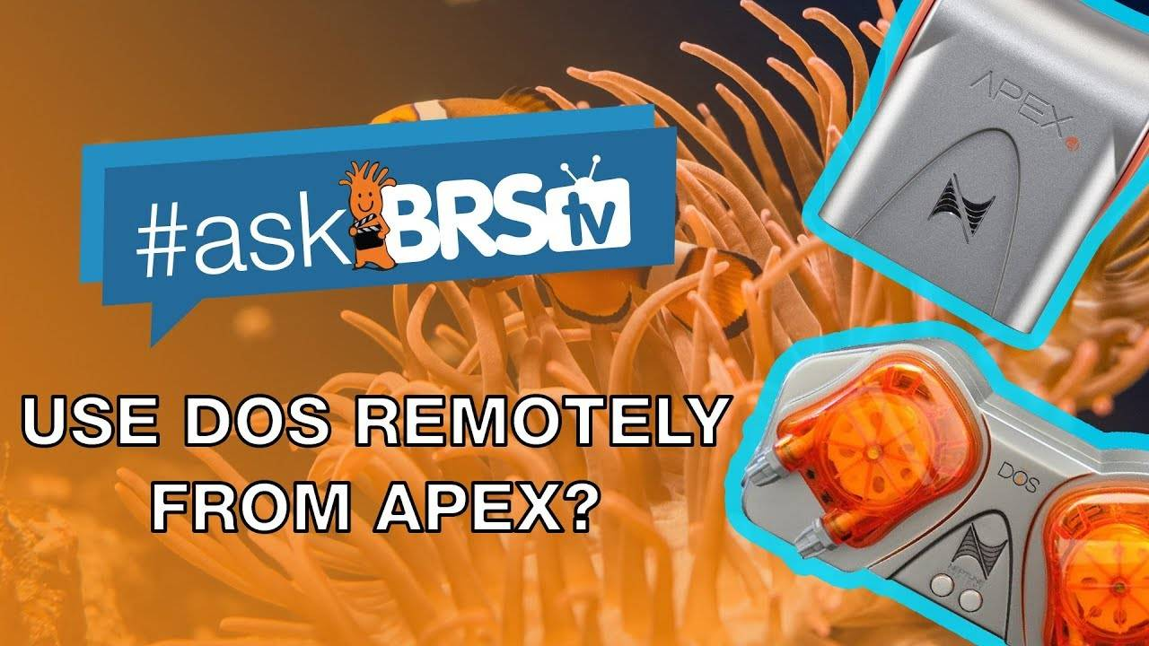 Can I use my Neptune DOS remotely from my Apex? - #AskBRStv
