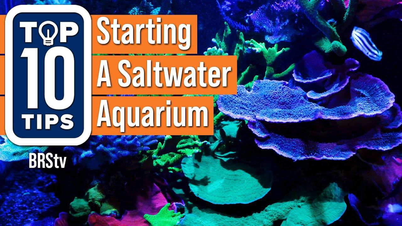 Top 10 Simple Tips For Starting A Saltwater Reef Aquarium