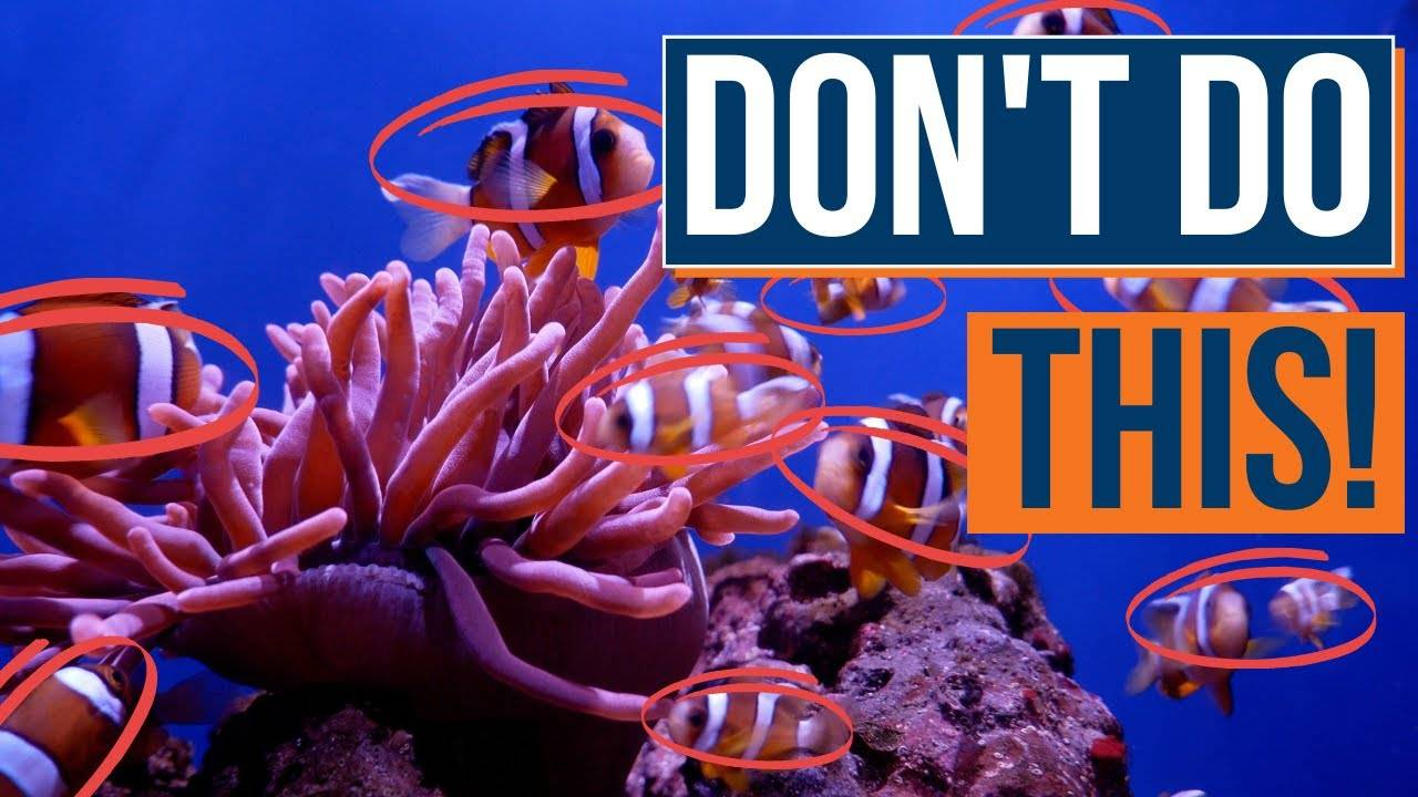 Next Steps and Mistakes To Avoid After Cycling - Beginner's Guide To Saltwater Aquariums - Episode 23