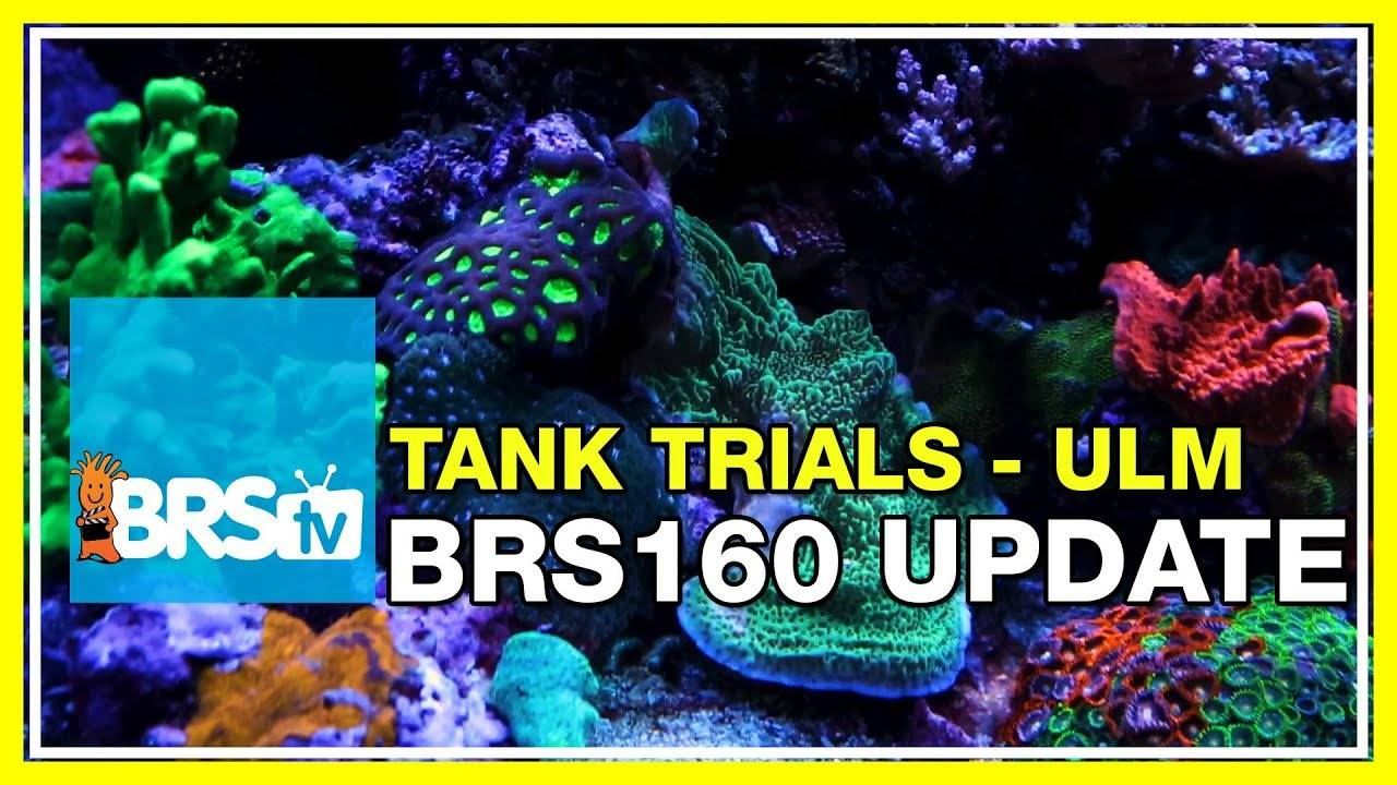 BRS160 Update and can the Triton method be considered ULM? | BRStv Tank Trials EP9