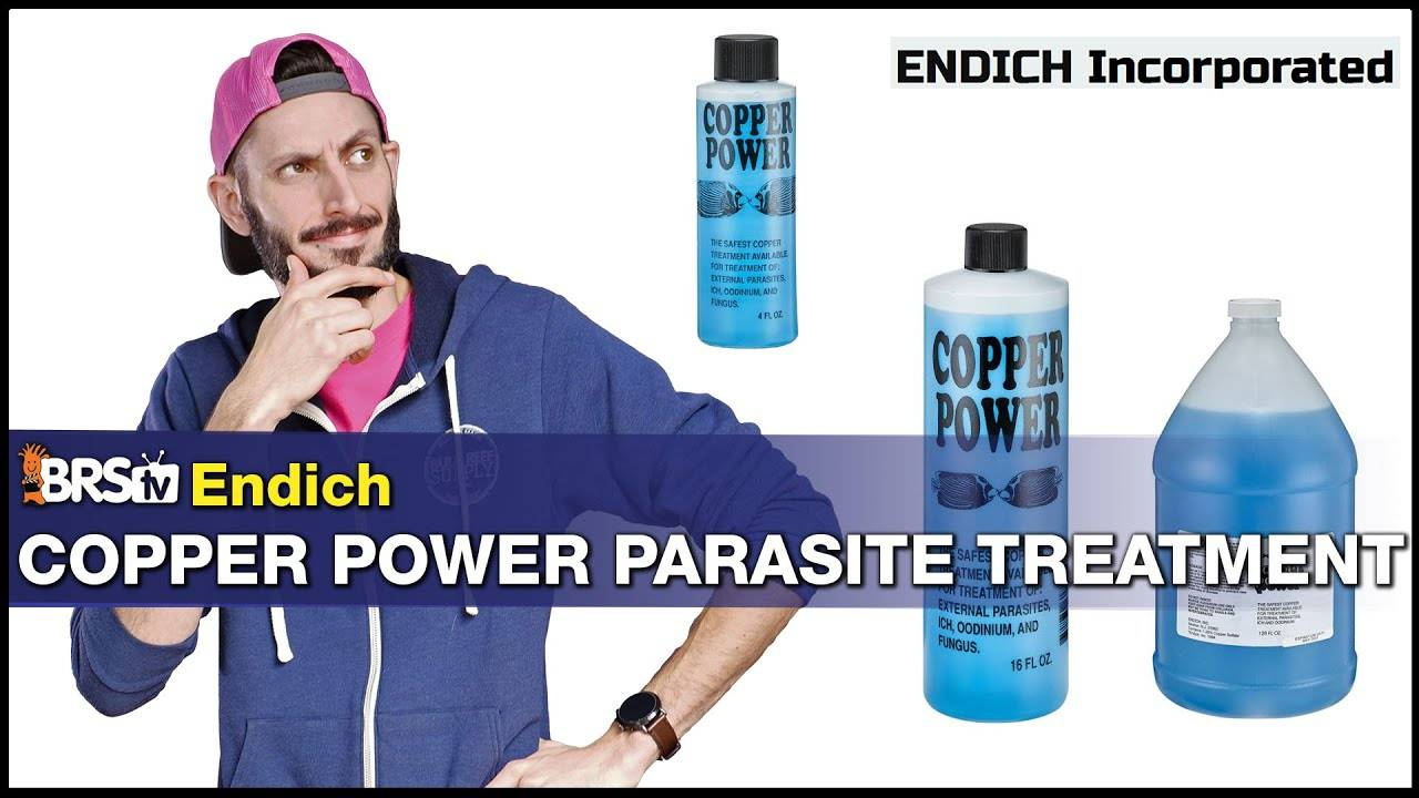 Do Your Fish Have Ich? Looking to Treat Them With Copper? Copper Power Is a Go to for Many Reefers!