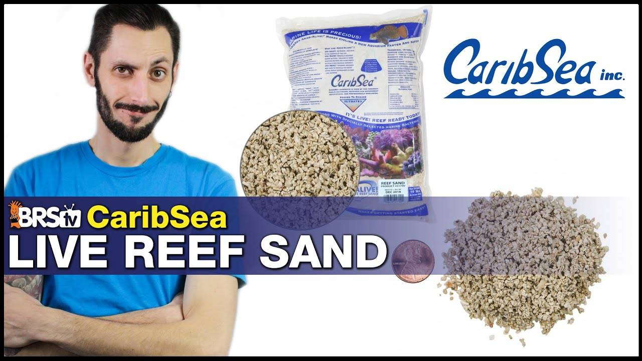 CaribSea Reef Live Sand: Be honest, a saltwater tank looks better with sand! We think so.