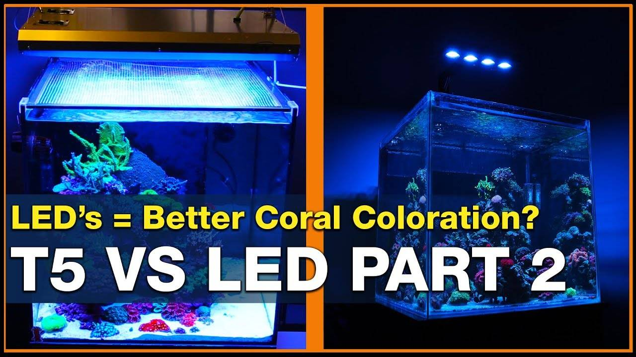 LED vs T5: LEDs can do it better! 3 Ways to Get Better Coral Coloration in Your Reef Tank.