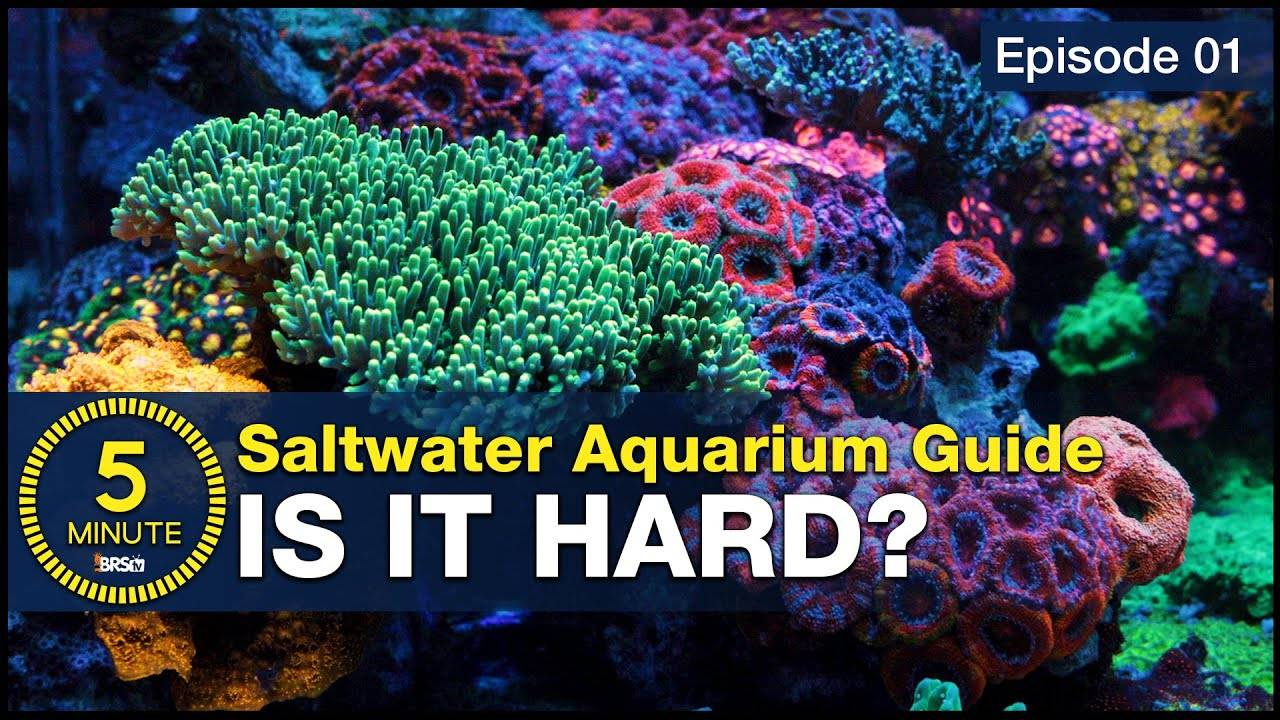 Hard is why it's cool! Setup a saltwater aquarium you can be proud of.