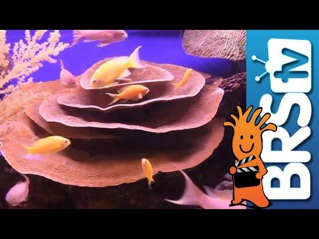 Fish and Corals: EP1 Selecting Fish for a New Reef Tank