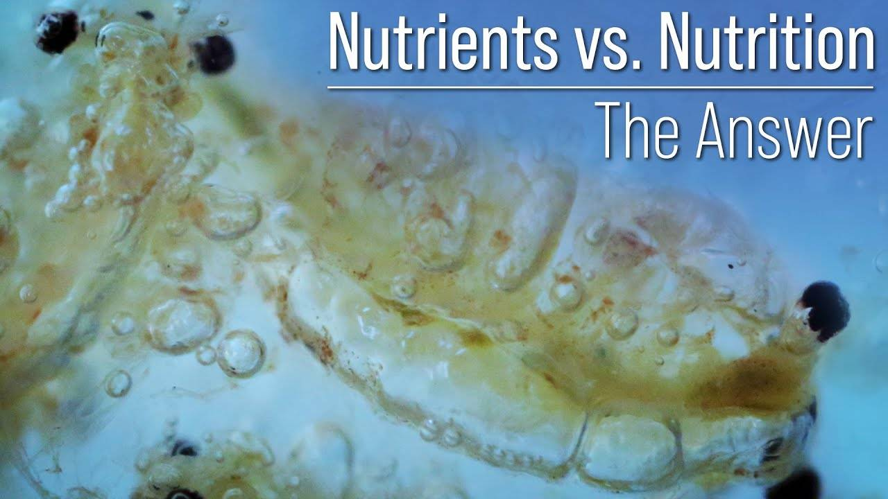 Nutrients vs Nutrition? A Distinction That Changes the Trajectory Your Reef Tank and Coral's Health