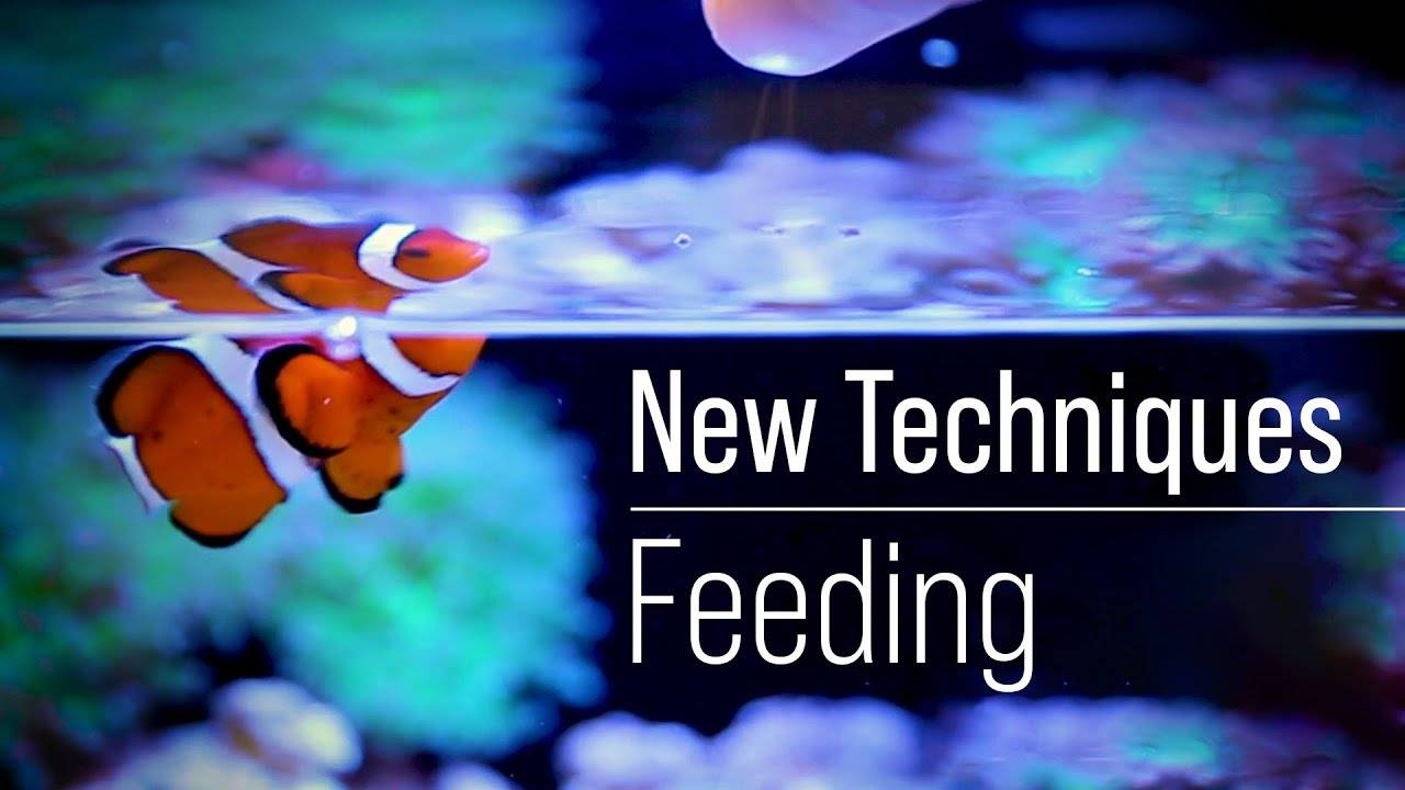 A Fish First Approach to Optimizing Fish Food While Optimizing Phosphate and Nitrate Independently