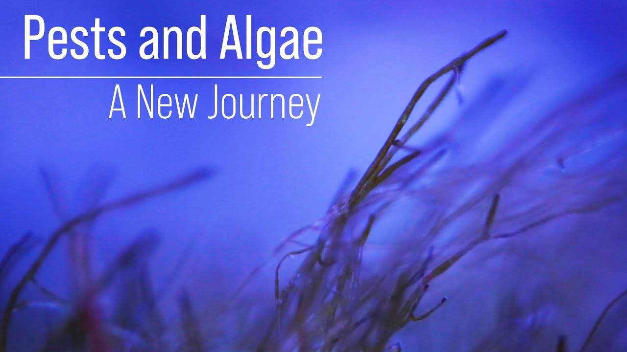 Starving Algae and Pests Until They Die? The Unintended Consequences of Ultra Low Nutrients