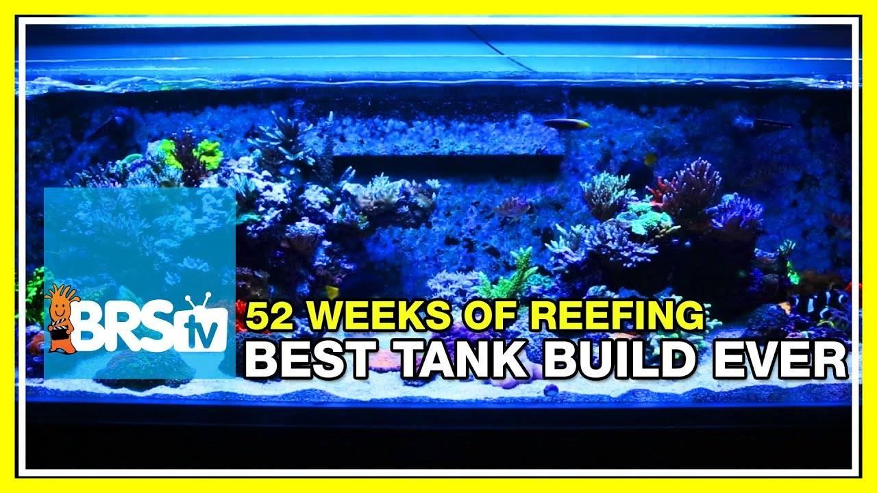 Week 1: Our Best Reef Tank Build Yet | 52 Weeks of Reefing #BRS160