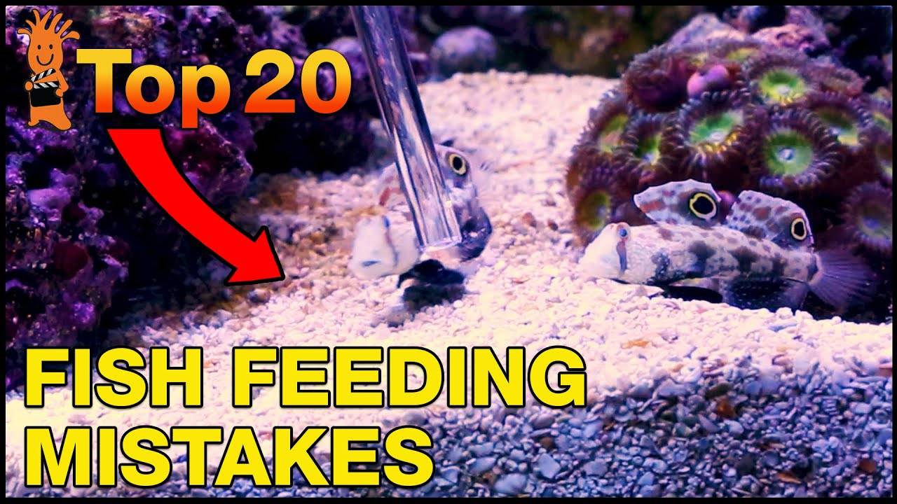 Top 20 Feeding Mistakes