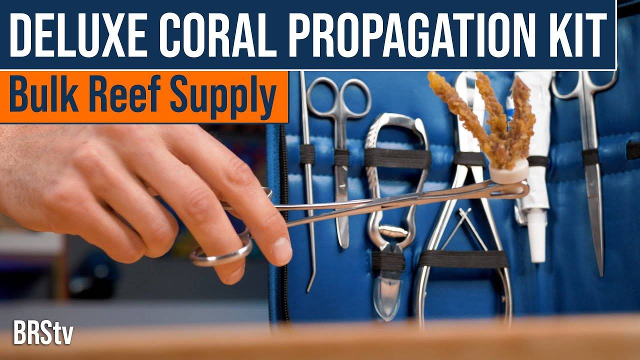 BRStv Product Spotlight - BRS Deluxe Coral Propagation Kit