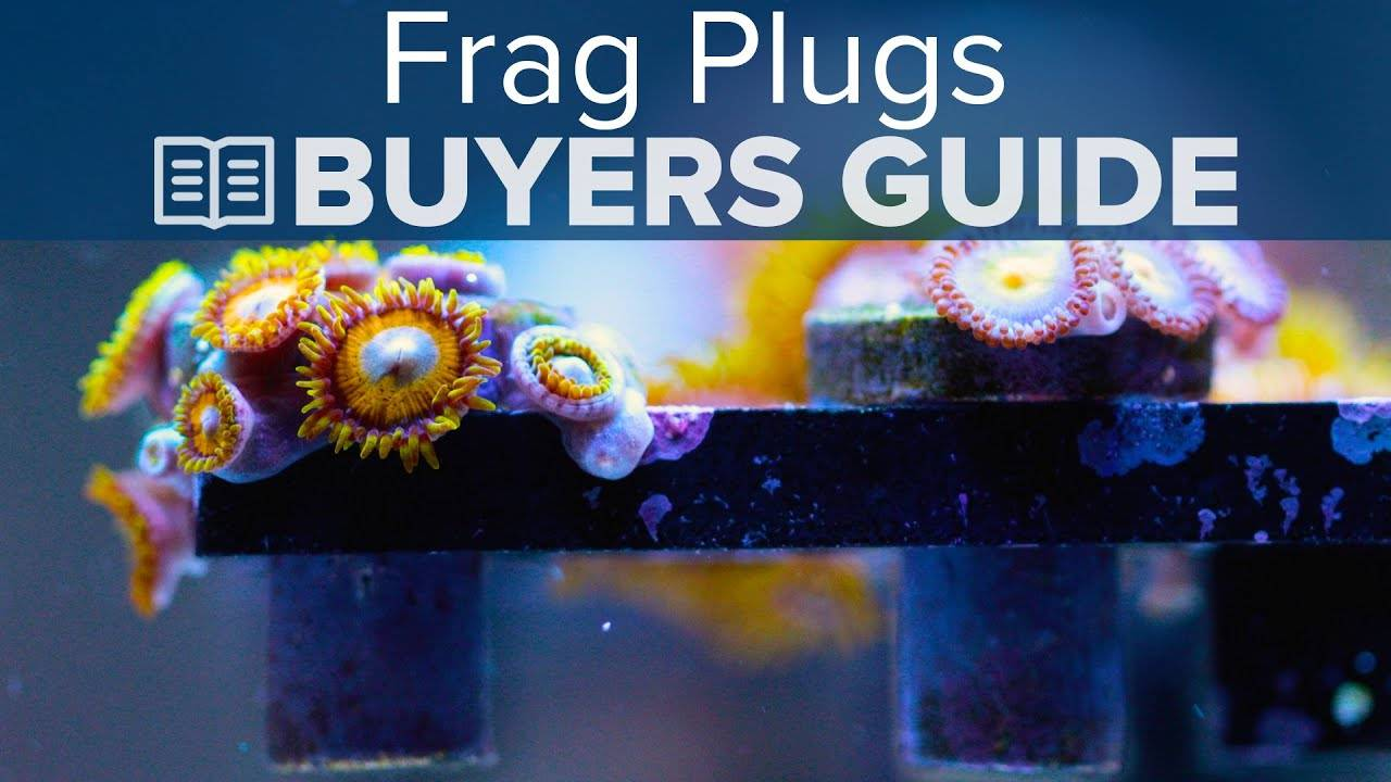 Watch Video - BRStv Buyers Guide To Frag Plugs
