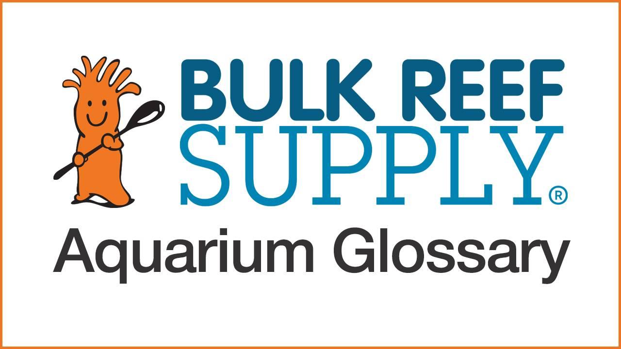 Aquarium Glossary  - List of commonly used aquarium terms