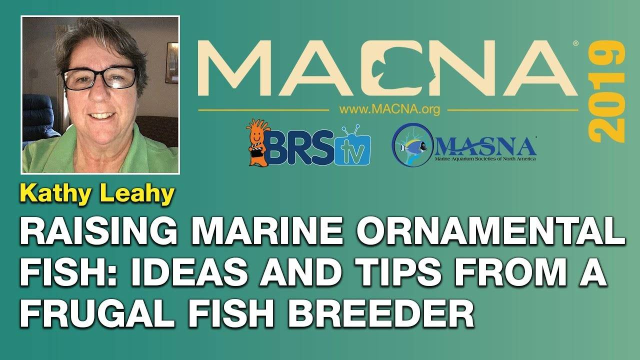 Kathy Leahy : Breeding saltwater fish in your home CAN be done. Here's how I do it. | MACNA 2019