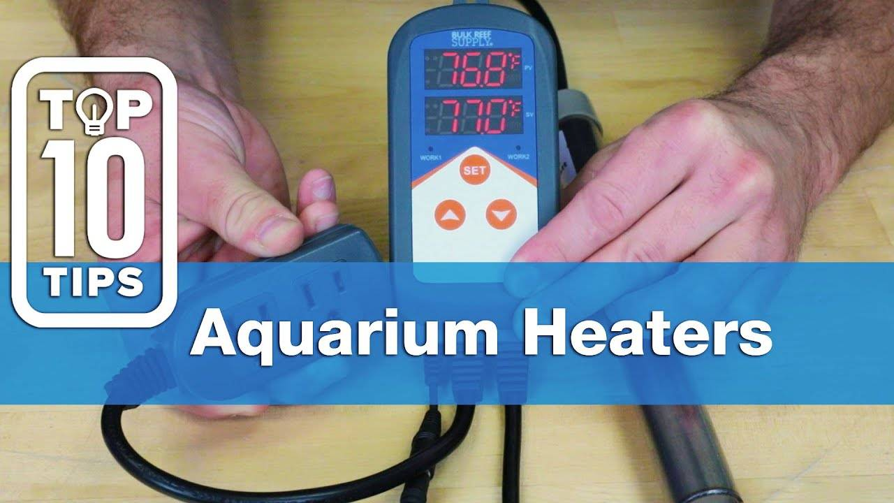 Top 10 Aquarium Heater Tips