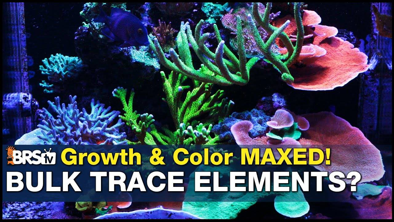 Its finally here. Trace elements for your BRS Bulk 2-Part : The BRS / Tropic Marin Hybrid Balling