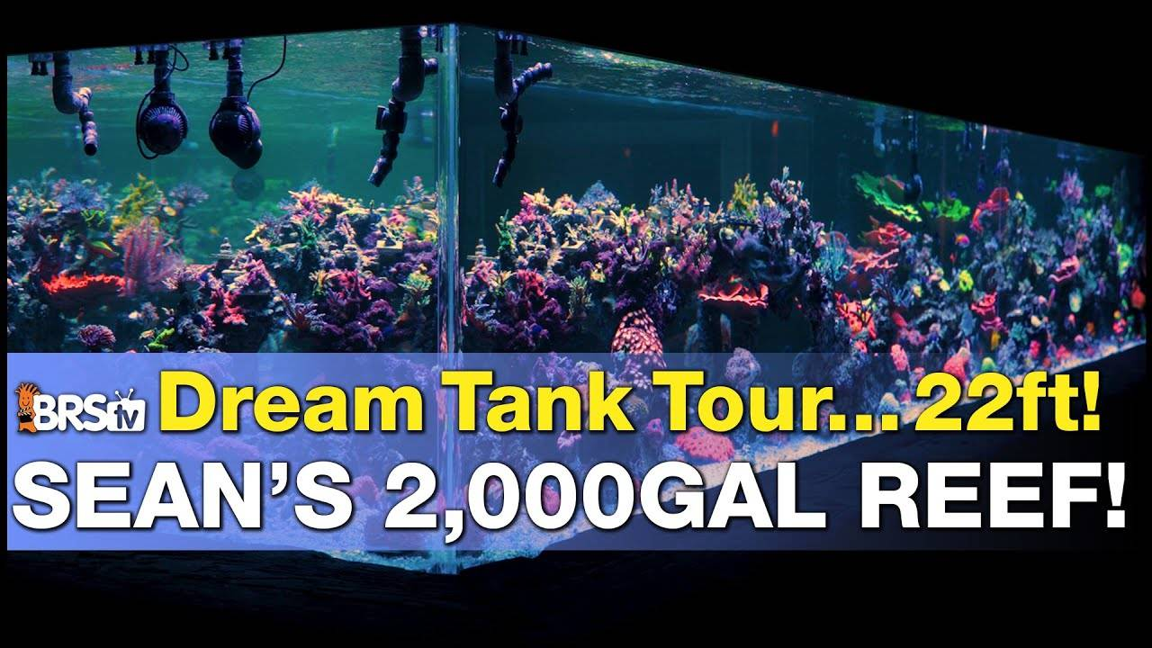 A 2,000gal SPS Dominant Reef Tank Tour in Minnesota?! The BIGGEST in-home saltwater tank on BRStv!