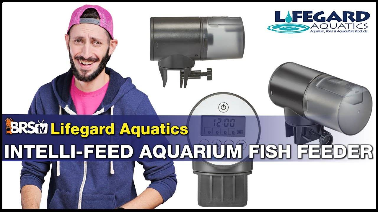 BRStv Product Spotlight-Lifegard Intelli-Feed Automatic Fish Feeder
