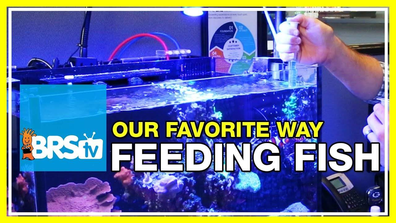 How do we feed the fish in our 160 gallon reef aquarium? | 52 FAQ