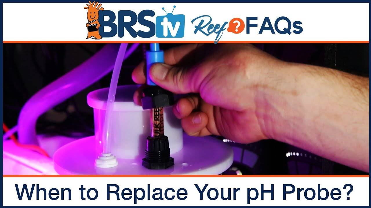 Reef tank pH - When should I replace my pH probe on my pH monitor or controller? - BRStv Reef FAQs