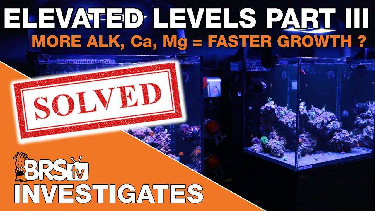 Grow corals faster with elevated reef tank parameters? - BRStv Investigates