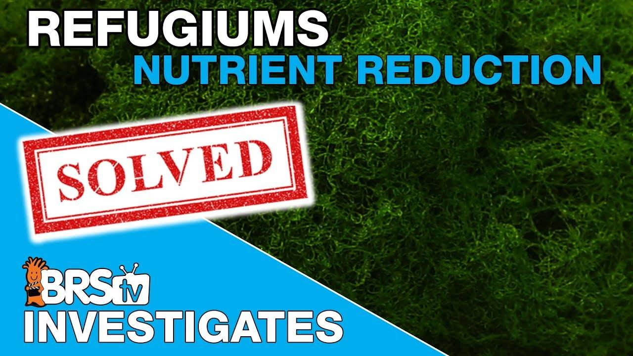 BRStv Investigates: Refugium lights and chaetomorpha testing, taken to the next level!