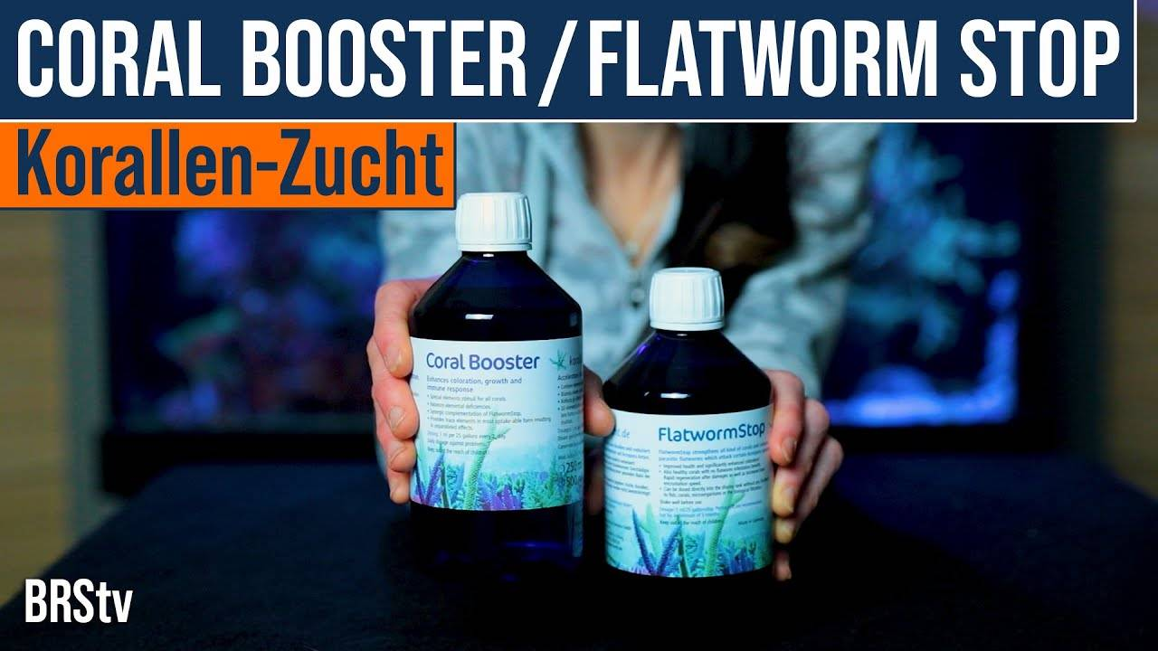 Korallen Zucht Flatworm Stop and Coral Booster For Treating Acro Eating Flatworms