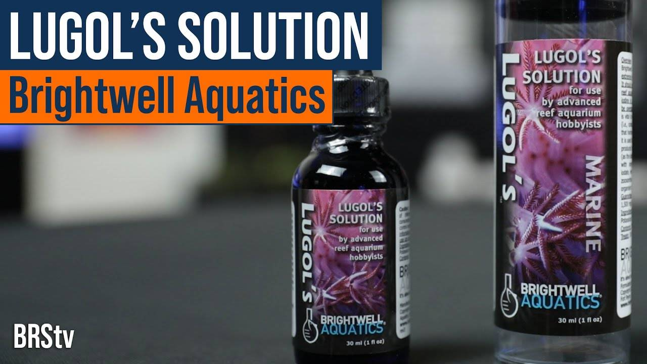 How To Dip Corals Using Brightwell Aquatics Lugol's Solution Iodine