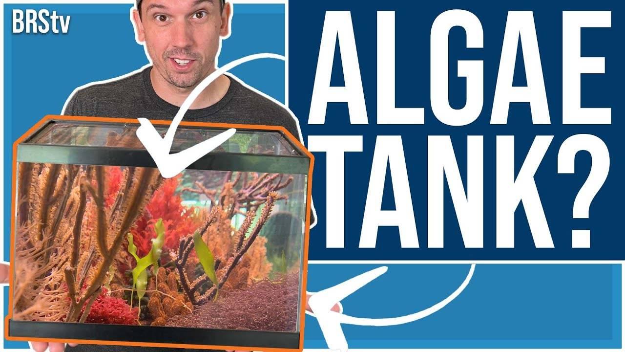 Macro Algae Tank Build Episode #1 - Why Macroalgae?