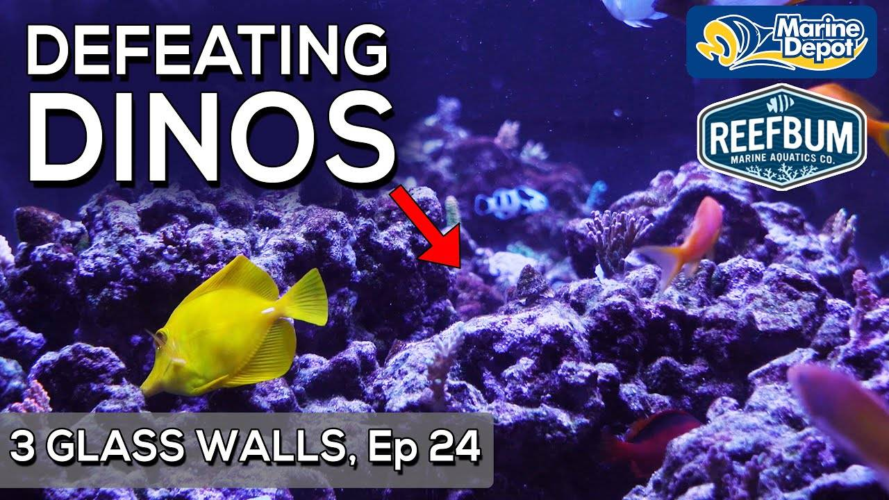 """""""Winning the Battle against a DINOFLAGELLATES Outbreak! 