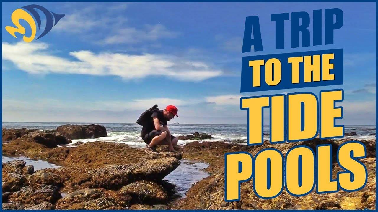 A Trip to the Tide Pools with Concordia University Marine Lab