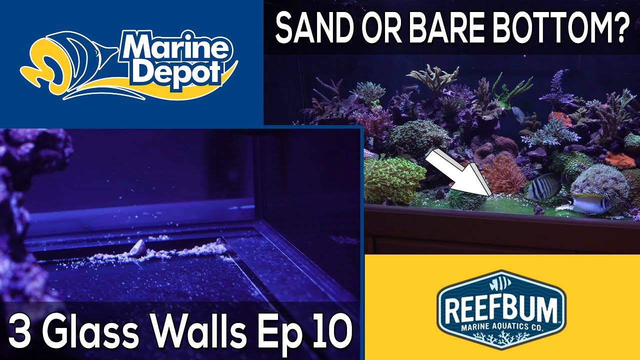 Sand or Bare Bottom? 3 Glass Walls with Reefbum Part 10