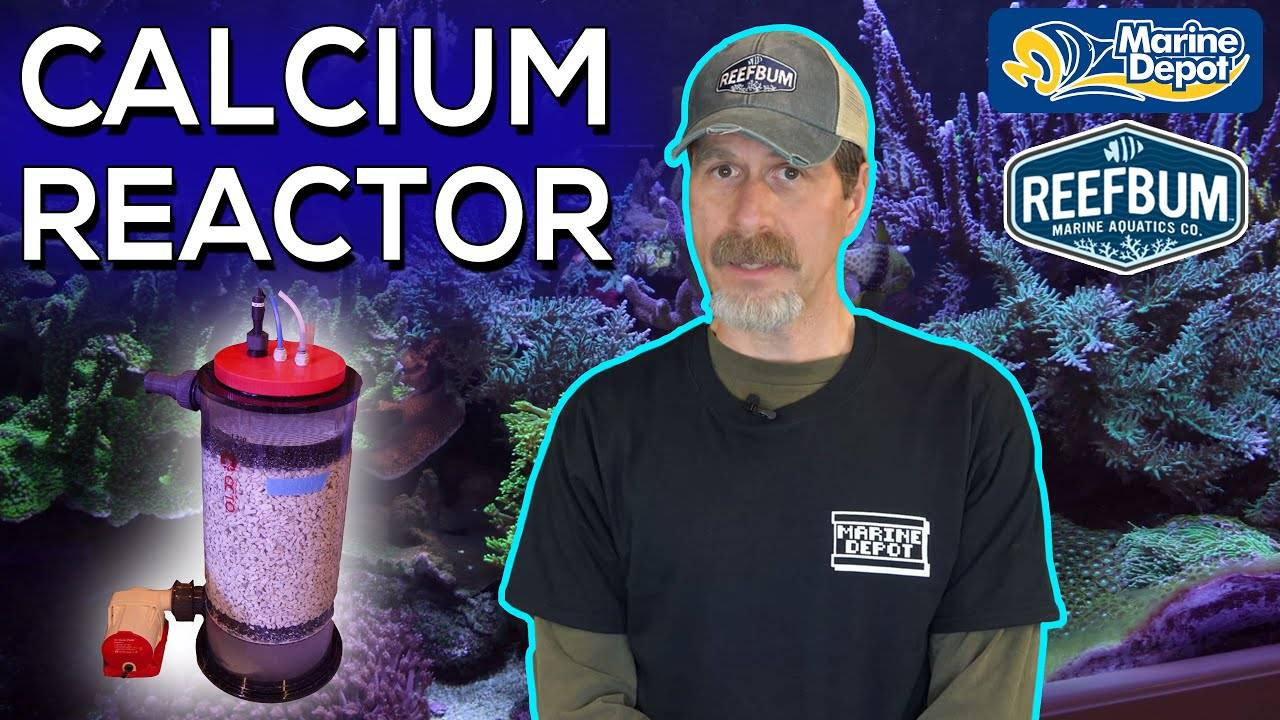 From 2-Part Dosing to a Calcium Reactor on 187-Gallon Reef Tank | 1-month update from ReefBum