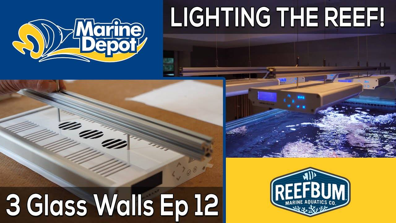 Lighting the Reef! 3 Glass Walls with Reefbum Part 12