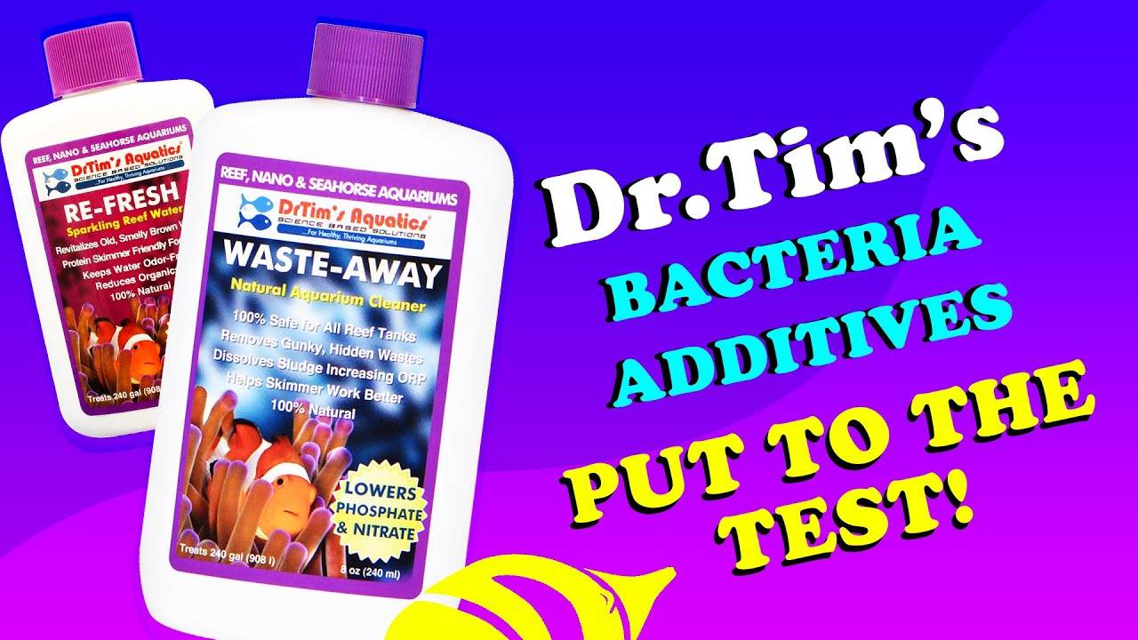 THE RESULTS ARE IN! We Put Dr. Tim's Cyanobacteria and Algae 'Recipe for Success' to the Test